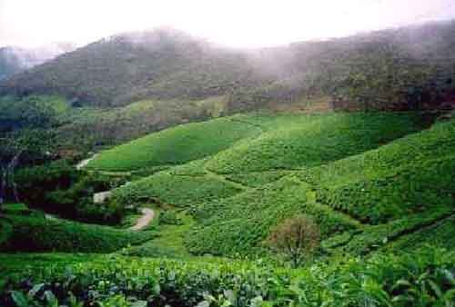 2  Nights 3 Days in Munnar