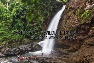 Wayanad Soochipara & Kanthanpara Waterfalls Stay Tour