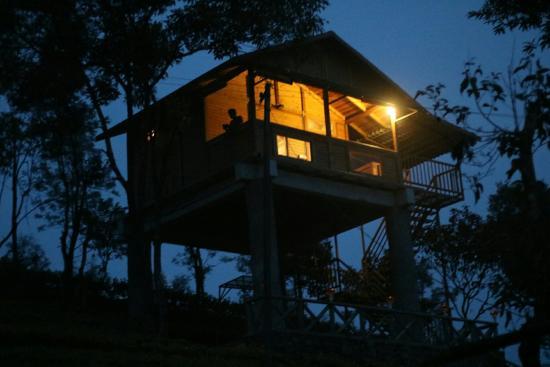 Tree House Nightview
